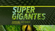 Special Teaser, month of supergiants animals.  Month dedicated to the largest animals on the planet earth. Animal Planet.  Credits: Portfolio Diego Troiano. Currently working in Discovery Latin Channels.  Creative Director: Diego López Calvo.  Script: Mariano Bonini.  Design, animation and 3d: Diego Martín Troiano.  Music: Enrique Colombo. All work is owned by Discovery Latin American Channels.
