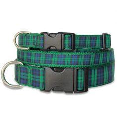 Plaid Dog Collar, Blackwatch Tartan. A perennial (and parochial favorite!