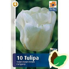 Hvide blomster Blomstrer i April-Maj Bliver 35 cm. høj.
