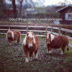 Good things come in small packages! #Horses