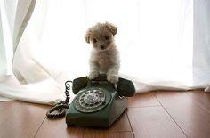 Ring ring! Herro?