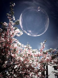 A cherry tree and a sphere