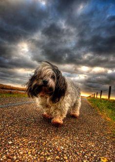 Petit chien se promenant dans l'immense orage
