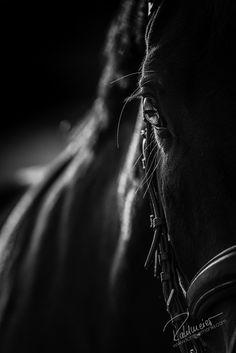 Landsmann 19 | Pferdefotografie München | Rahlmeier