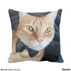 Bow tie cat