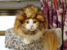 子ライオンのホワイトデー | オスカー様としもべ達