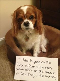 World's Naughtiest Dogs: 25 Images That Will Make You Laugh - Seenox