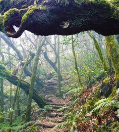 la gomera laurisilva forest