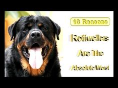 18 Reasons Rottweilers are the absolute worst - YouTube