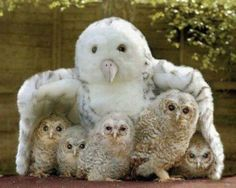 Snowy Owl mother and her brood. posted by Ana Kaz via bebesdelreinoanimal.blogspot.com