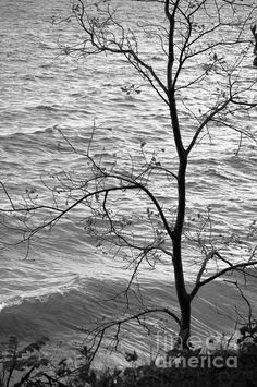 Lone Tree, Windy Day, Puzzle Pieces, Artwork Prints, Black And White Photography, Color Show, Beautiful Images, Colorful Backgrounds, Fine Art America