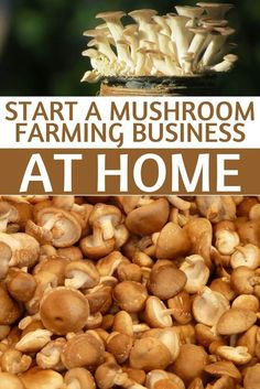If you like mushrooms and you're interested in earning money from growing things, you might consider a mushroom farming business. Specialty mushroom growers are sprouting up all over, and can be a great home based business to start as a side hustle.