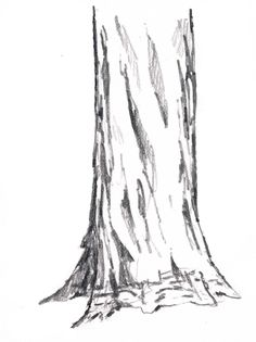 Drawing How to Draw Trees: vertical cracks - John Muir Laws - Learn how to draw trees with deep vertical cracks such as the Coast Redwood. The distribution of the cracks helps show the roundness of the trunk.