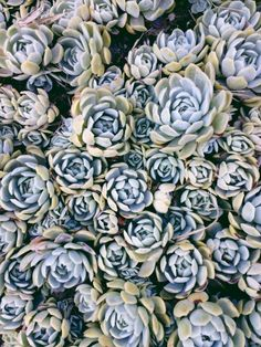 Succulents. | David Meye | VSCO Grid