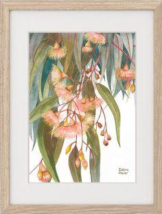 Australian Gifts, Australian Native Flowers, My Art Studio, Pink Blossom, Leaf Art, Free Prints, Flower Wall, Painting & Drawing, Original Artwork