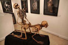 Was ist der erotischste Ort in Paris? Bff Pictures, Funny Animal Pictures, Arte Com Grey's Anatomy, Ero Guro, Human Embryo, Human Anatomy Drawing, Alien Concept Art, Skeleton Art, Baby Images