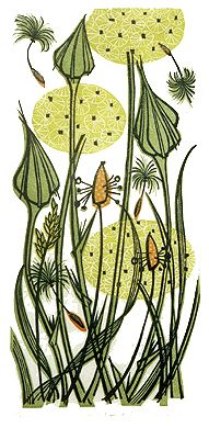 Angie Lewin is a lino print artist, wood engraver, screen printer and painter depicting the UK's natural flora in linocut and other limited edition prints. Lino Print Artists, Linocut Prints, Art Prints, Angie Lewin, Doodle Paint, Creative Textiles, Thread Painting, Art For Art Sake, Textile Art