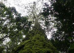 Pensar Eco, é lógico!: O Brasil é o país com a maior biodiversidade de ár...