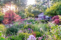 Rob Cardillo: Beautiful garden photography!  Lovely gardens in his portfolio
