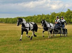 Carriage drivingv championship, obstacle course, held at Royal Windsor Great Park 2010. Michael Huggan Photography