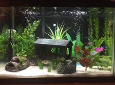 Pet Fish Supplies Non-toxic Eco-friendly Aquarium Decor Background Plate Aquatic Pets Fish Tank Aquarium accessoriesDecorations & Substrate Planted Aquarium, Betta Aquarium, Aquarium Stand, 20 Gallon Aquarium, 10 Gallon Fish Tank, Fish Aquariums, Tropical Freshwater Fish, Freshwater Aquarium Fish, Tropical Fish