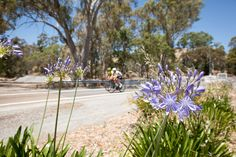 Road Cycling in the Adelaide Hills - Pro Rider Nathan Haas heads to Adelaide, scene of the yearly Tour Down Under, and checks out the riding, eats and cycling meets in this often overlooked cycling paradise.