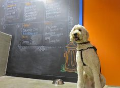 Classmates coming in!  Casey's in week 3 of his Urban Herding (treiball) class...an eager student!