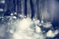 spring snowflakes Snowflakes, Spring, Photography, Painting, Outdoor, Art, Outdoors, Art Background, Photograph