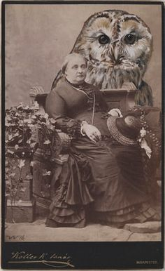 Artist Anja Wülfing has a knack for combining the antiquated with the absurd, painting colourful creatures onto turn-of-the-century photos Budapest, Old Photographs, Photos, Altered Images, Nature Animals, Carnival, Lion Sculpture, Creatures, Collage