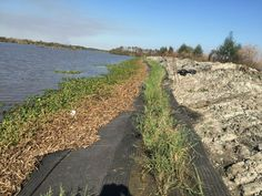 'Living shoreline' of recycled plastic mats, native plants could slow erosion and saltwater intrusion