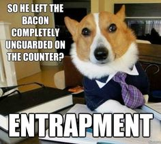 New meme Lawyer Dog is taking over the Internet one piece of litigation at a time, but Business Cat has taken offense. Social Media is just amazing! Business Cat, Strategy Business, Serious Business, Funny Animal Pictures, Funny Animals, Cute Animals, Dog Pictures, School Pictures, Clever Animals