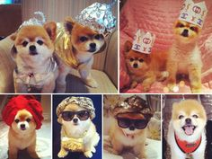 II wasn't a fan of dressing up dogs until i saw the Beckerman sisters two cute pups: Cubby and Marni
