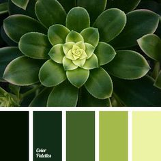 monochrome green color palette palettes with color ideas for decoration your house, wedding, hair or even nails. Color Schemes Colour Palettes, Green Colour Palette, House Color Schemes, Color Palate, Color Combos, Green Colors, Spring Color Palette, Colours, Design Seeds