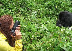 Gorillas Safari