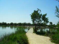 Disabled Travel -  Parc Ornithologique, Camargue Great Paths. Wheelchair Access = good