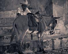 Cuba - Trinidad -Man and donkey