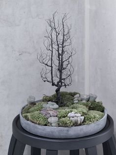 Bonsai with Mushroom and moss//