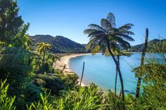 Abel Tasman Coast Track in the Able Tasman National Park, New Zealand. One of New Zealand's Great Walks. New Zealand Attractions, Milford Track, Abel Tasman National Park, Bay Of Islands, Great Walks, Wanderlust, New Zealand Travel, Boat Tours, Best Hikes