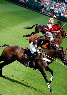 I've never been to a polo match- it's something I must see.