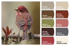 *Chip It! by Sherwin-Williams – ChipCard by Michelle S. Paint Colors For Home, House Colors, Colour Schemes, Color Combos, Sherwin William Paint, Color Palate, Design Seeds, Color Stories, Pantone Color