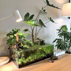 Freshwater aquarium above water plants Planted Aquarium, Aquarium Aquascape, Aquarium Fish, Aquarium Garden, Aquarium Landscape, Jellyfish Aquarium, Nano Aquarium, Nature Aquarium, Aquarium Filter