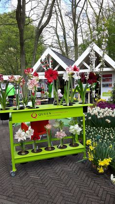 Queen Flowerbulbs at the Keukenhof!