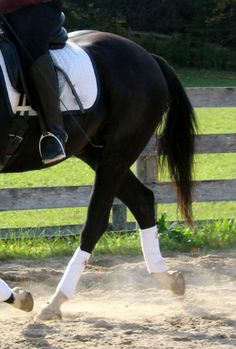 How You Can See a Horse's Active Back   Horse Listening