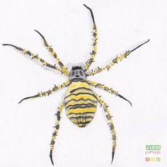 Un jardin en bonne santé est un jardin vivant ! Et quand l'Argiope frelon, l'une des plus belles araignées observables dans notre Hexagone y élit domicile, en voici la preuve ! Faites entrer votre jardin dans la danse de la biodiversité ! http://www.jardipartage.fr/argiope-frelon/