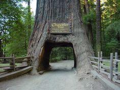 Redwood National and State Parks - Uniglobe Lexus (@Uniglobelexus1)   Twitter