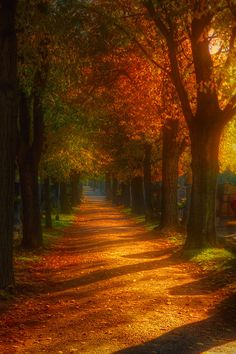 Let's go for a walk in the fall, and enjoy the autumn scenery! Foto Nature, All Nature, Fall Pictures, Pretty Pictures, Beautiful World, Beautiful Places, Simply Beautiful, Landscape Photography, Nature Photography