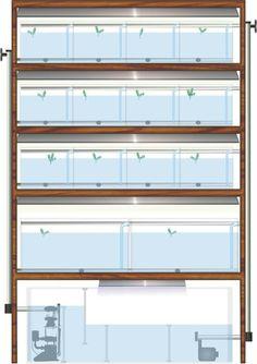 Acuarios de reproductores Aquarium Snails, Aquarium Sump, Discus Aquarium, Discus Fish, Home Aquarium, Aquarium Design, Marine Aquarium, Aquarium Fish Tank, Freshwater Aquarium
