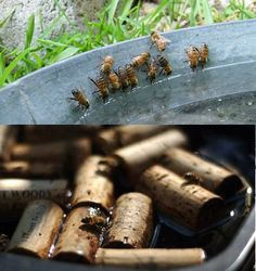 What a great use for corks! Bees can easily drown in water, but with some corks they have wonderful little life rafts. #DIY4Bees