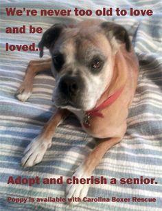 Cherish a senior!
