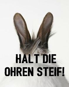 Halt Die Ohren Steif Tattoos Sprüche Whatsapp Status Deutsch